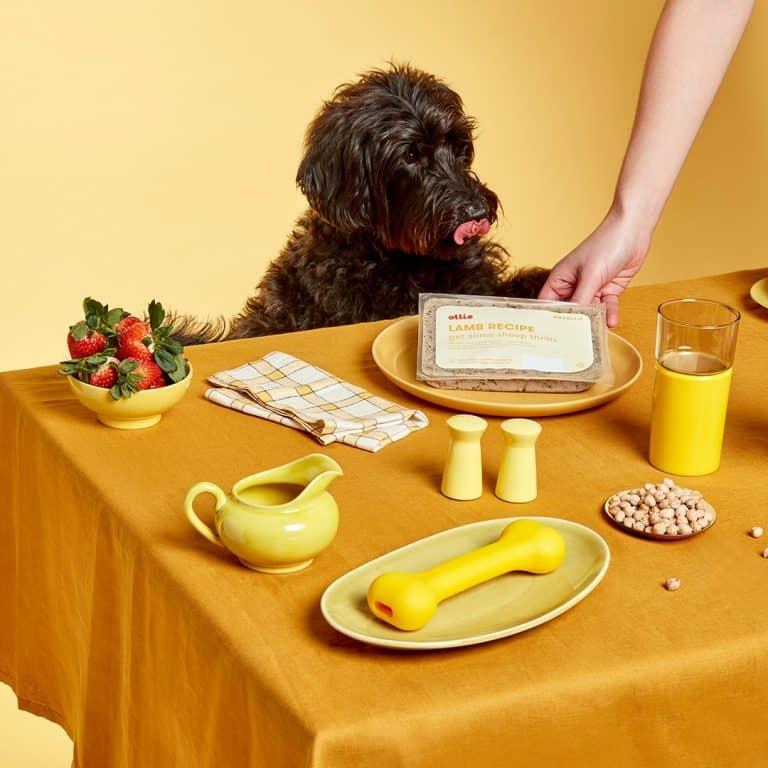 Best fresh dog food subscriptions comparison